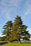Árboles de pino sobre la presa del lago Shasta Foto de archivo