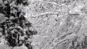 Árboles de pino y ramas de árbol desnudas cubiertos en cubierta de nieve gruesa almacen de video