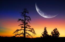 Árboles de pino y salida del sol con la luna Fotos de archivo libres de regalías