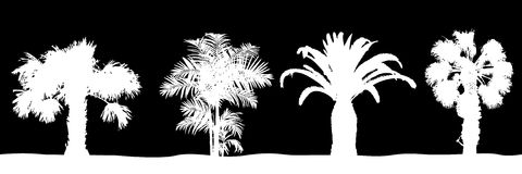 Árboles de Plam Imagen de archivo libre de regalías