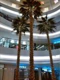 3 árboles de Plam Imagen de archivo libre de regalías