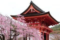 Árboles de Sakura delante de un templo de Japón Imagen de archivo libre de regalías