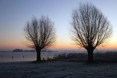 Árboles de sauce del invierno Imagenes de archivo