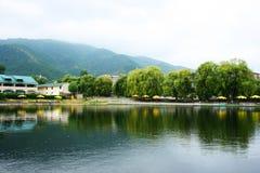 Árboles de sauce en el lago Fotos de archivo