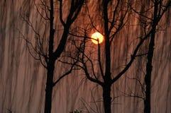 Árboles de sauce en puesta del sol Foto de archivo libre de regalías