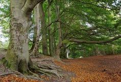 Árboles de Sharpenhoe Imagen de archivo libre de regalías