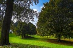 Árboles de un parque público en Turín Piamonte, Italia Foto de archivo libre de regalías