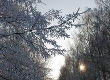 Árboles debajo de la nieve en el parque imagen de archivo