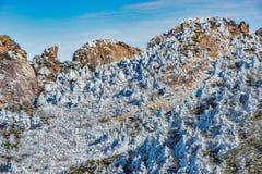 Árboles debajo de la nieve en los acantilados Fotografía de archivo libre de regalías