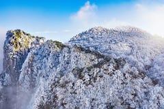 Árboles debajo de la nieve en los acantilados Imágenes de archivo libres de regalías