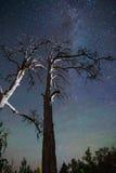 Árboles debajo del cielo estrellado Imagen de archivo libre de regalías