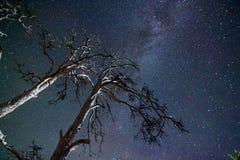 Árboles debajo del cielo estrellado Imágenes de archivo libres de regalías