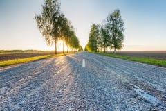 Árboles del abedul en la puesta del sol cerca del camino Foto de archivo libre de regalías
