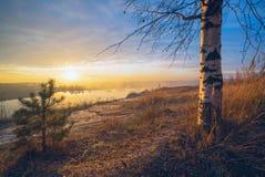 Árboles del abedul y de pino en la puesta del sol por el lago Fotos de archivo