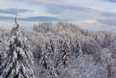 Árboles del abeto y de pino cubiertos debajo de la nieve Tierra fantástica del invierno Imagenes de archivo