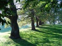 Árboles del arbolado del otoño Imagen de archivo libre de regalías