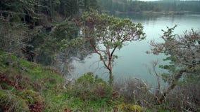 Árboles del Arbutus, islas 4K UHD del golfo almacen de metraje de vídeo