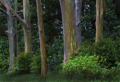 Árboles del arco iris, Maui, Hawaii Foto de archivo