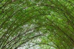 Árboles del bambú del túnel Imagen de archivo libre de regalías
