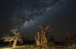 Árboles del baobab en la noche debajo de las estrellas Foto de archivo
