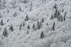 Árboles del blanco nevado en las montañas Imagen de archivo libre de regalías