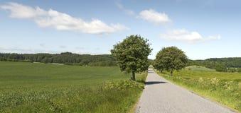 Árboles del borde de la carretera Foto de archivo libre de regalías