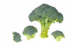 Árboles del bróculi. Foto de archivo libre de regalías