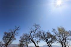 Árboles del brote cerca de un lago Fotos de archivo