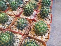 Árboles del cactus Fotografía de archivo