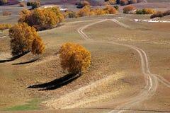 Árboles del camino y de abedul en campo de la altiplanicie Fotografía de archivo libre de regalías