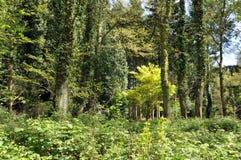 Árboles del campo de la primavera Foto de archivo