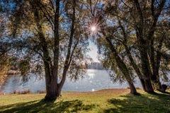 Árboles del canal de la luz del sol Imágenes de archivo libres de regalías