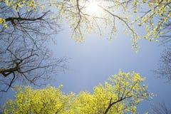Árboles del cielo y de arce Fotos de archivo