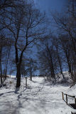 Árboles del claro de luna Fotos de archivo libres de regalías