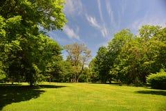 Árboles del comienzo del verano e hierba fresca y un cielo azul Imágenes de archivo libres de regalías