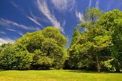 Árboles del comienzo del verano e hierba fresca y un cielo azul Fotos de archivo