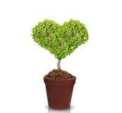 Árboles del corazón en potes imagen de archivo libre de regalías