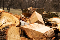 árboles del corte en el bosque foto de archivo libre de regalías