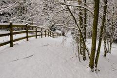 Árboles del cottonwood del invierno   Imagen de archivo