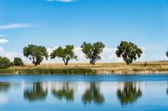 Árboles del Cottonwood reflejados en agua azul Foto de archivo