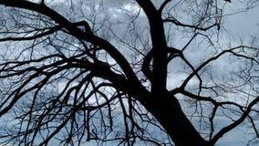 Árboles del espejo Fotografía de archivo libre de regalías