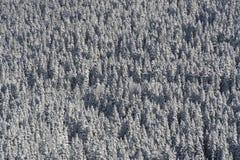 Árboles del extremo de la nieve Imagenes de archivo
