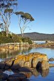 Árboles del granito y de eucalipto, bahía de fuegos Foto de archivo libre de regalías