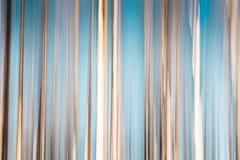 Árboles del ICM-abedul con el cielo azul Imagenes de archivo