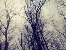 Árboles del invierno fotos de archivo