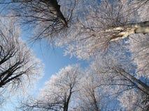 Árboles del invierno imágenes de archivo libres de regalías