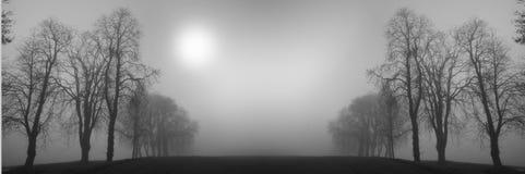Árboles del invierno Imagen de archivo