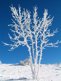 Árboles del invierno Fotografía de archivo