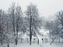Árboles del invierno Imagen de archivo libre de regalías