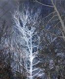 Árboles del invierno Imagenes de archivo